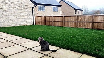 Lilly the cat looking at her new house at Greenbooth Village